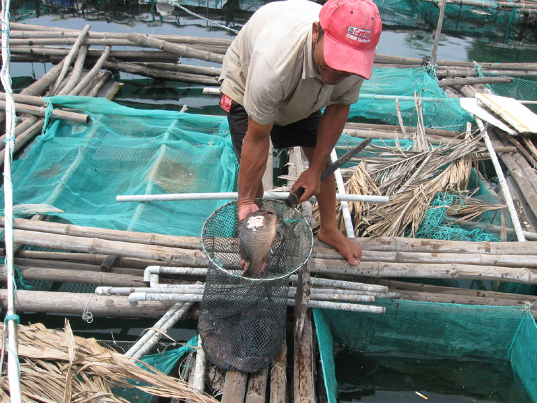 Cá nuôi chết hàng loạt ở thôn Phú Lương, xã An Ninh Đông (huyện Tuy An). (Ảnh: baophuyen.com.vn)