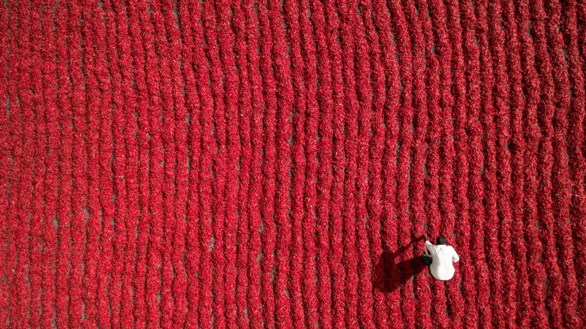 Phơi ớt đỏ ở Guntur, Ấn Độ (ảnh: Aurobird)