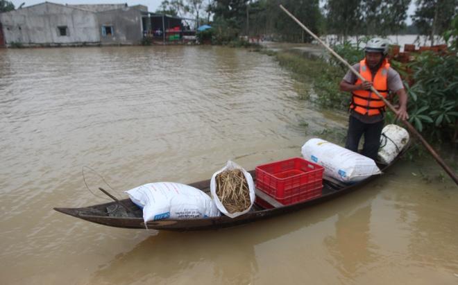 Trong khi chờ nước rút hẳn, người dân ở Quảng Nam phải dùng ghe để vận chuyển rơm rạ lên chỗ cao cho gia súc ăn. Ảnh vnexpress.net