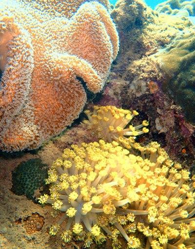 Theo cuốn Atlas thế giới về vỉa san hô, rạn san hô được coi là các hệ sinh thái biển cực kỳ đa dạng, là nơi sinh sống của hơn 4.000 loài cá, vô số loài thích ty (Cnidaria), thân mềm, giáp xác và nhiều động vật khác. Rạn san hô bị thu hẹp, nguồn lợi thủy sản sẽ suy giảm, ngành du lịch vì thế cũng bị ảnh hưởng nghiêm trọng. (Ảnh: furama.com)