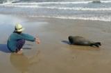 Cái chết của chú hải cẩu: Khi con người không còn sợ làm điều ác nữa