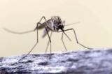 7 lý do muỗi thích cắn bạn hơn những người khác