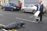 Chú hải cẩu ngày ngày đi 'xin ăn' ở cửa hàng cá ở Ireland (video)