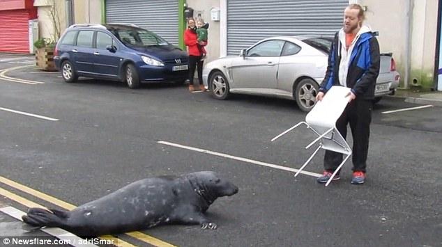Hải cẩu… người cứ như vậy làm sao ta kinh doanh được! (Ảnh: Youtube)