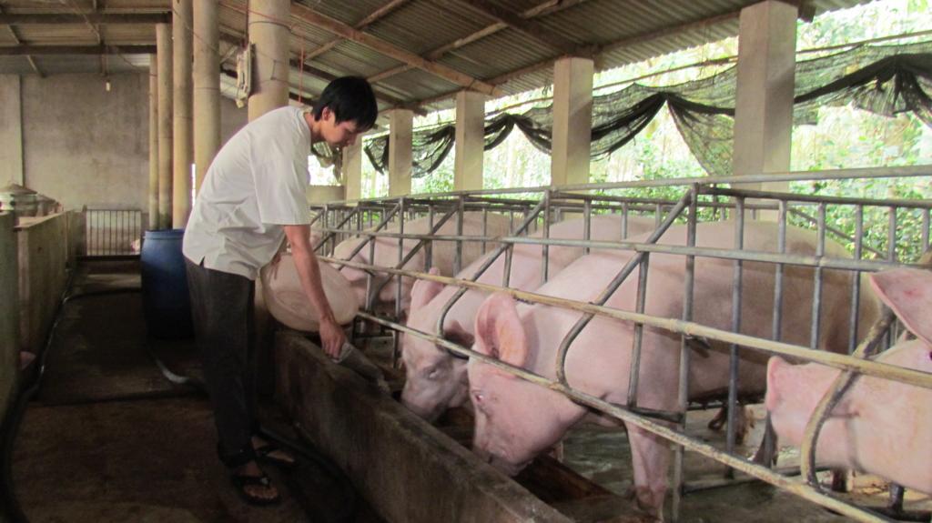 giá thịt lợn giảm
