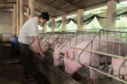 Giá thịt lợn giảm: Vị đắng đằng sau con số tăng trưởng cao