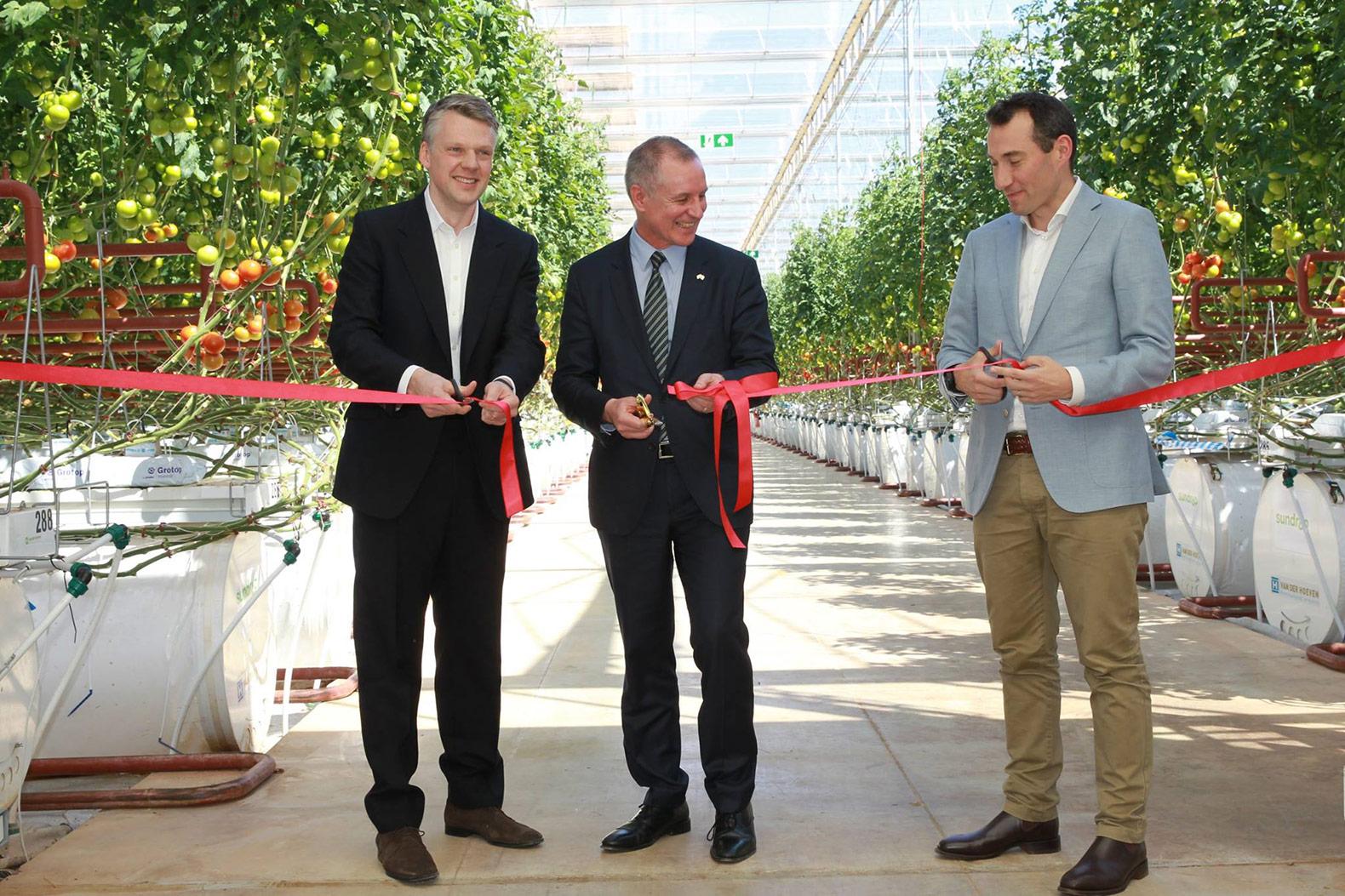 Nông trại Sundrop chính thức khai trương vào tháng 10/2016 (ảnh: Sundrop Farms Facebook)