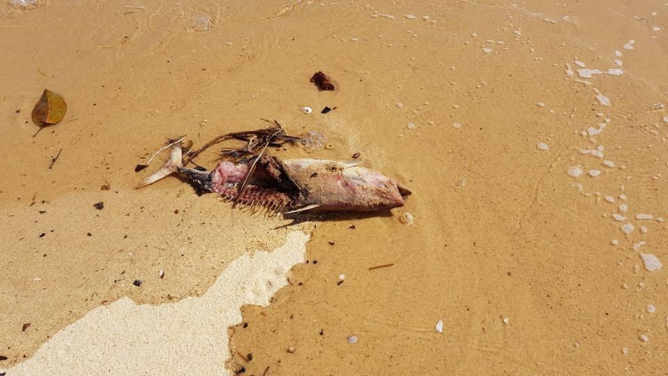 bồi thường thảm họa môi trường biển