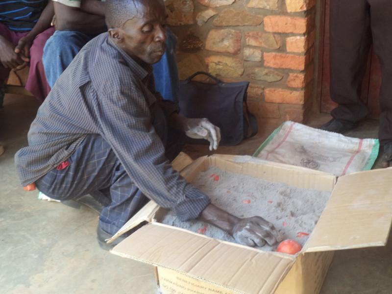 Anh Vital Nduwimana đang xếp cà chua vào trong tro. (Ảnh: Jean de Dieu Ininahazwe)