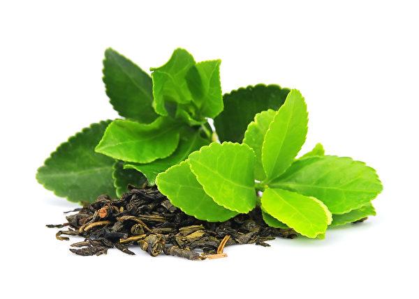 Lá trà có tác dụng giải độc cho cơ thể (Ảnh: Epochtimes)