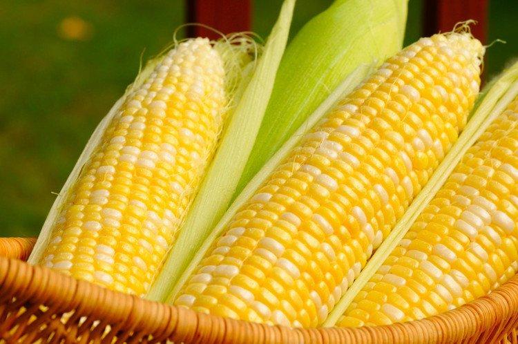 Chuyện trạng Bùng đưa hạt giống cây ngô từ Trung Quốc về Việt Nam