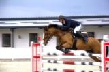 Doanh nghiệp kinh doanh đặt cược đua ngựa phải có vốn tối thiểu 1.000 tỷ đồng