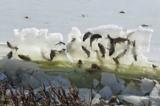 Hiện tượng lạ: Cá bị đóng băng trong 'không khí'