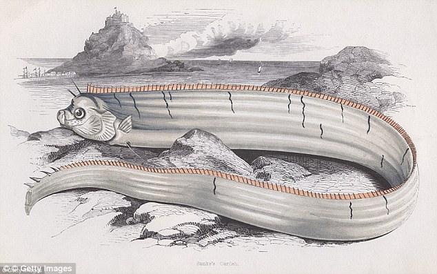 Kích thước lớn của cá rồng biển đã mang đến nhiều câu chuyện trong giới ngư dân và thủy thủ (tranh minh họa của họa sĩ)