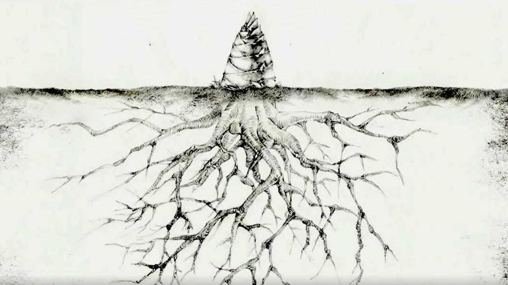 Trong 5 năm, cây mao trúc âm thầm lớn lên...