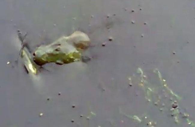 hồ gươm ô nhiễm