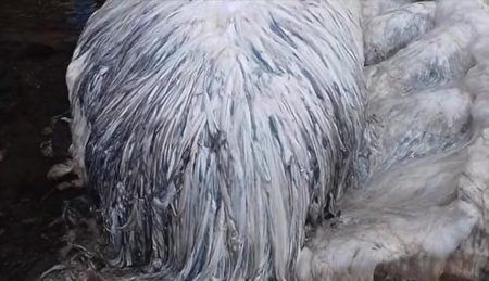 Cấu trúc lông trắng của sinh vật lạ