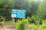 Cà Mau: 4ha rừng phòng hộ rất xung yếu chết do úng nước