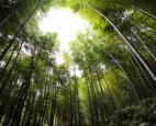 Bạn có dám can đảm sống như cây mao trúc?