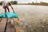 thủy sản chứa hóa chất