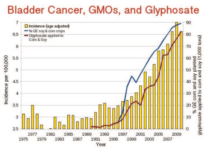 Thống kê cho thấy tỉ lệ ung thư bàng quang ở Mỹ tăng rất nhanh kể từ khi GMO được đưa ra thị trường năm 1996 và glyphosate được phun tràn lan (nguồn: responsibletechnology.org)