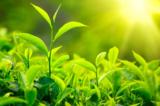 Nghiên cứu: Dùng ánh sáng và cỏ cây để tạo ra nhiên liệu hydrogen