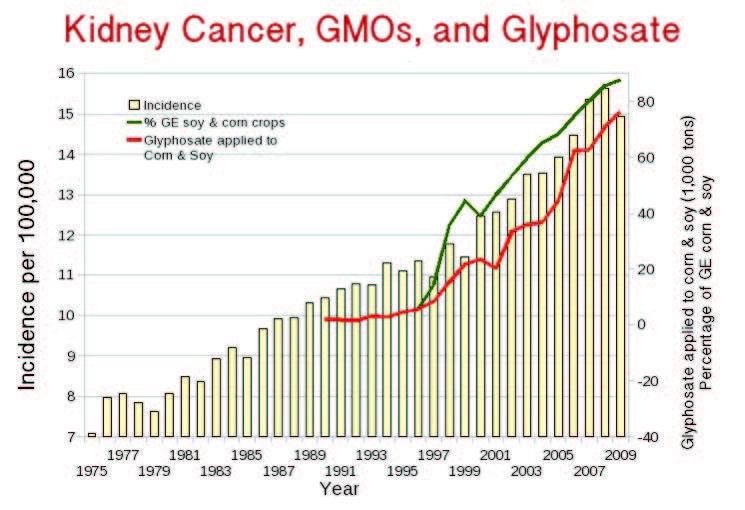 Tỉ lệ ung thư thận ở Mỹ tăng kể từ khi GMO được đưa ra thị trường năm 1996 và glyphosate được phun tràn lan (nguồn: responsibletechnology.org)