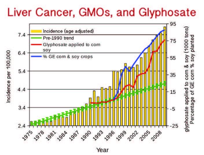 Ung thư gan ở Mỹ cũng tăng rất nhanh kể từ khi GMO được đưa vào sử dụng năm 1996 và glyphosate được phun tràn lan (nguồn: responsibletechnology.org)