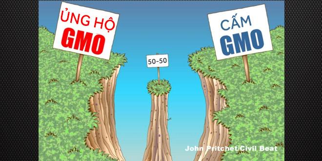 Giới khoa học vẫn đang chia làm 2 phe trong vấn đề GMO