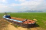 Ảnh: Hồ nước ngọt lớn nhất Trung Quốc đang biến thành đồng cỏ