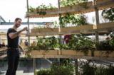 Growroom – Khu vườn của tương lai