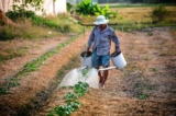 Mở rộng đối tượng và phạm vi được miễn thuế sử dụng đất nông nghiệp