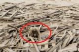 Người phụ nữ sống sót kỳ diệu trong vụ lở đất kinh hoàng ở Peru (Video)
