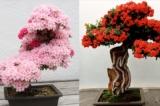 Chiêm ngưỡng 30+ tác phẩm bonsai tuyệt mỹ trên khắp thế giới (P.2)