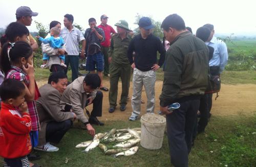 Những con cá lớn chết được người dân vớt dọc dòng suối Nậm Huống. (Ảnh: MC/vnexpress.net)