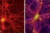 Sự tương đồng kỳ lạ giữa bộ não và vũ trụ
