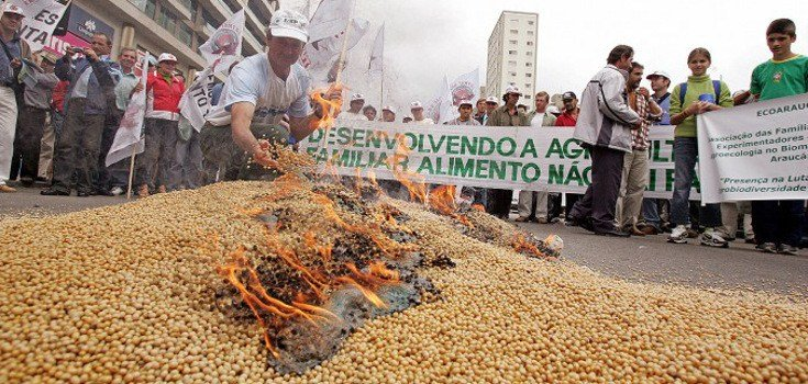 Người biểu tình ở Brazil đốt các hạt đậu nành GMO.(ảnh qua naturalsociety.com)