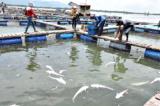 Bà Rịa – Vũng Tàu tìm cách ngăn nước thải chảy ra sông Chà Và