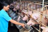 Thịt lợn giảm giá: Vấn đề nóng của người chăn nuôi và ngành chế biến thực phẩm