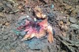 Hàng loạt cây xanh bị chặt hạ ở Bãi Cháy (Hạ Long)