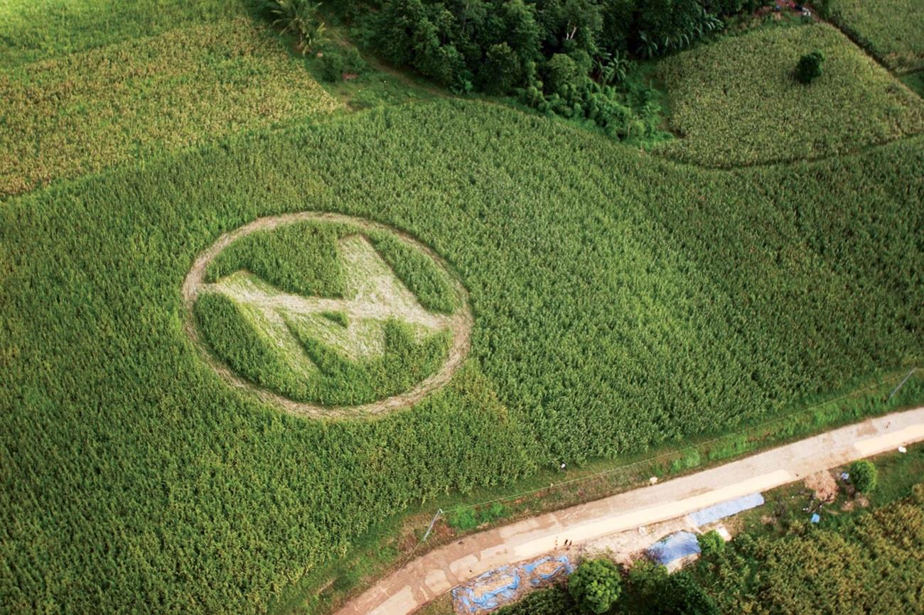 Biểu tượng tẩy chay Monsanto trên cánh đồng ở Philippines (ảnh: Greenpeace)