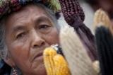 Monsanto (P2): Lũng đoạn chính sách và thị trường thực phẩm biến đổi gen