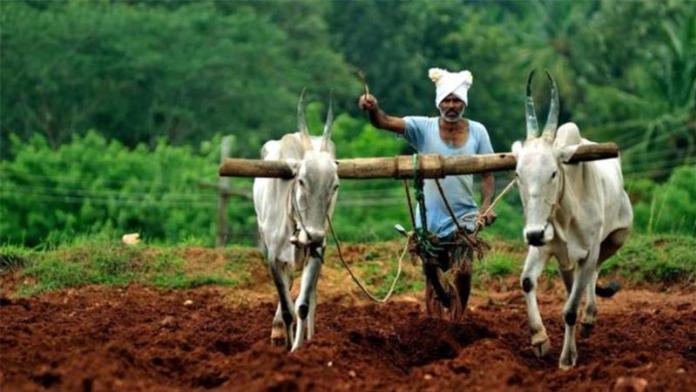 Người dân Ấn độ đang canh tác trên đồng ruộng của mình (ảnh: nationofchange.org)