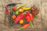 'Hơi thở của rồng' – Loại ớt cay nóng tới mức có thể gây tử vong