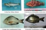 Biển ô nhiễm tại 4 tỉnh miền Trung: Chưa thể khai thác hải sản tầng đáy trở lại