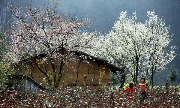 Sơn La: Rộn ràng những lễ hội trên xứ sở cao nguyên Mộc Châu thơ mộng