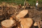 Rừng Việt Nam 2016: Cả nước còn hơn 10 triệu ha rừng tự nhiên