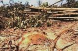 Chặt hạ hơn 40.000 cây tràm trên đất đang chờ giải quyết khiếu nại, DN bồi thường 1,5 tỷ đồng