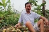 Hải Phòng: Hơn 2.000 cây chuối bị chặt phá liên quan đến tranh chấp đất đai