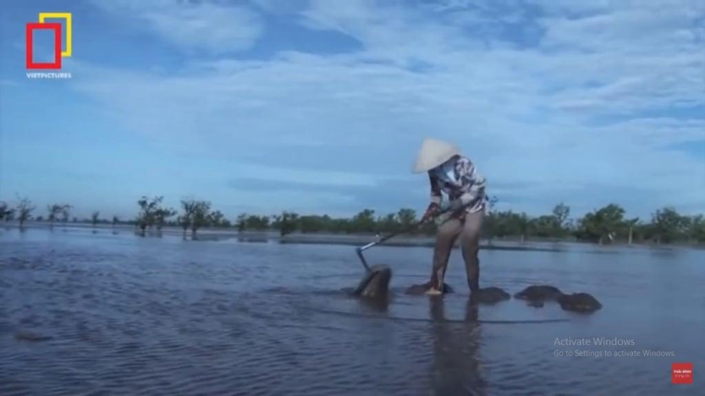 Người dân cào ốc móng tay ở biển Thụy Trường, Thái Bình. (Ảnh cắt clip/Vietpictures Media)